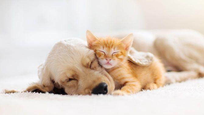 子犬と子猫の睡眠