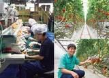 多くの企業が注目、カゴメの「植物工場」