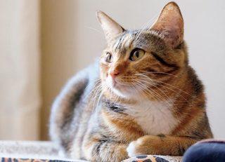 うちの愛猫が発する