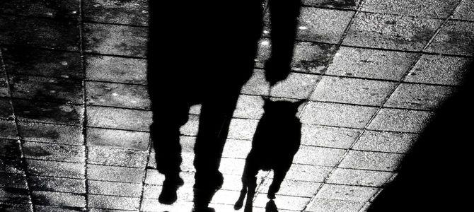 リードを付けたブルテリアと夜の散歩
