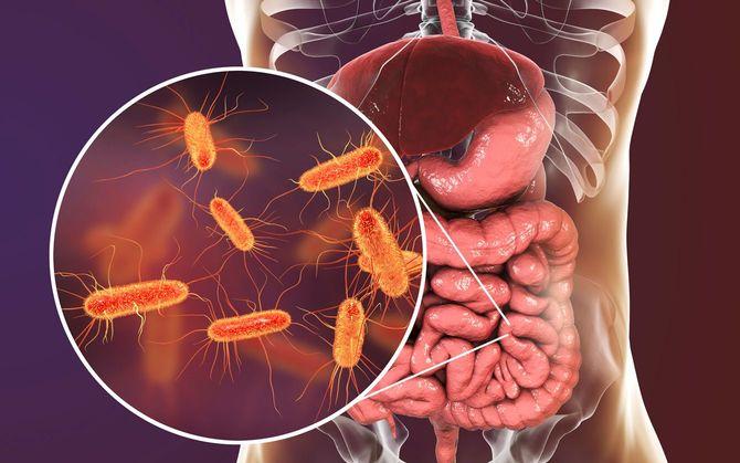 腸内マイクロバイオームのイメージ
