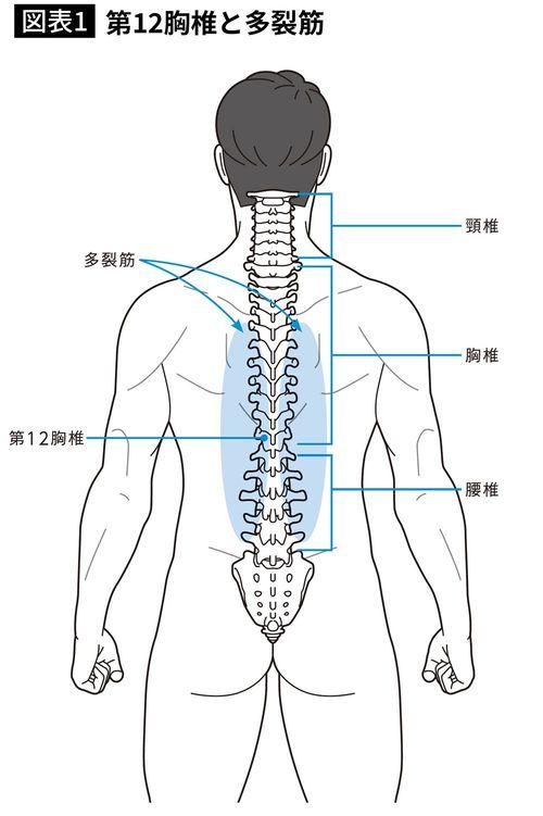 第12胸椎と多裂筋