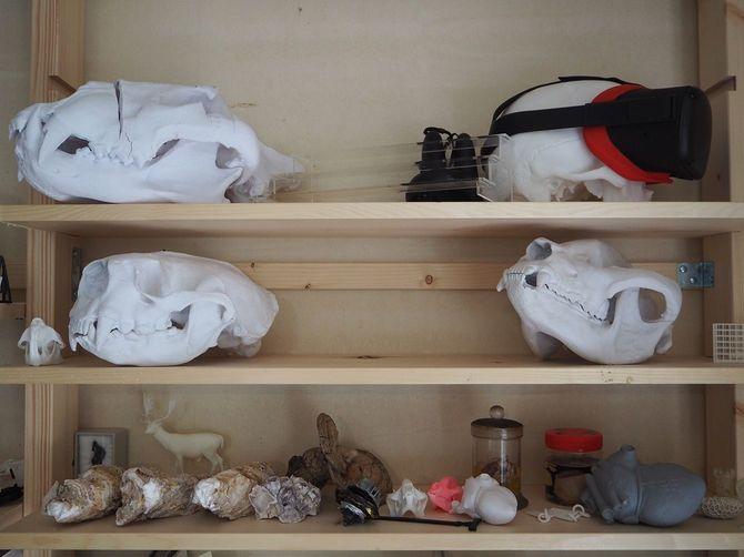 棚に並ぶ骨格標本