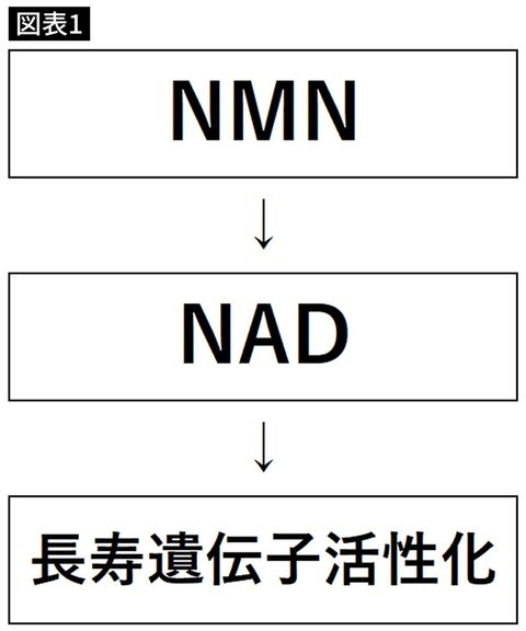 NADの合成経路を単純化した図