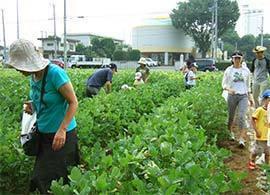 「自産自消」こうすれば農業は改革はできる!