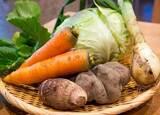 ロボットやICT技術が野菜を育てる