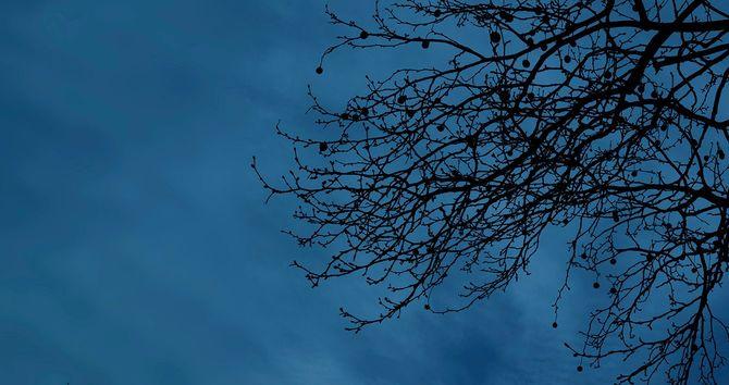 葉の無くなった木