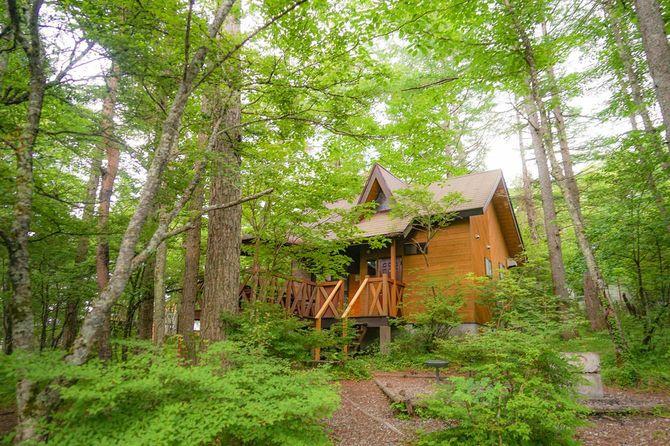 茂みに建つ1軒の家屋