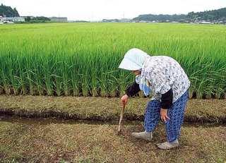 農家と障がい者の取り組み「農福連携」