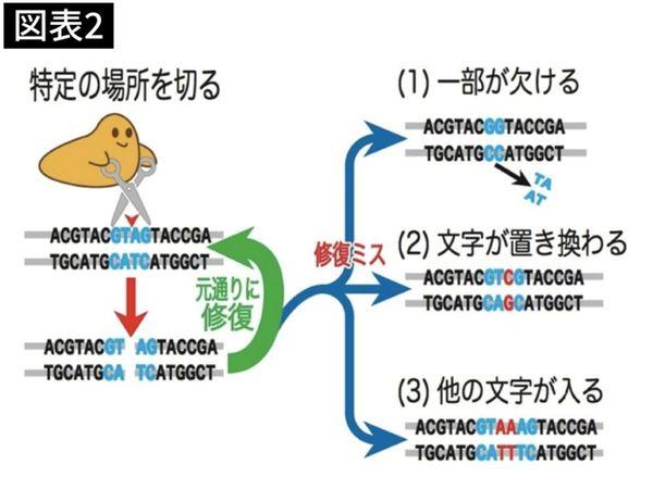 ハサミの役割を果たす酵素がDNAを切断し、修復ミスが起きた場合に、そこにある遺伝子の性質が変わる