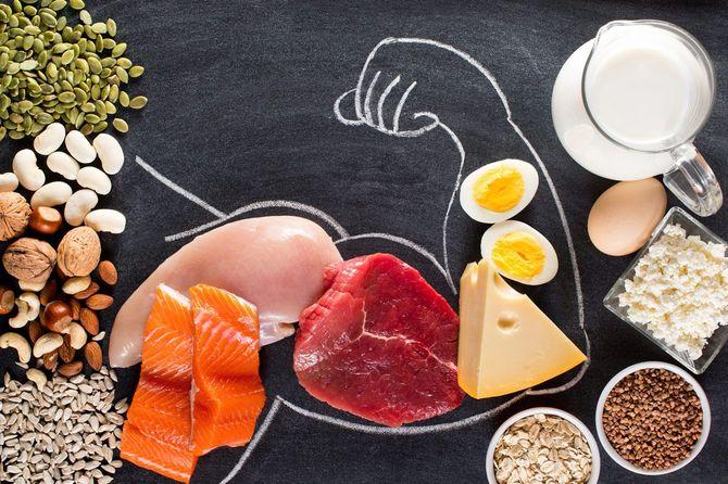 高タンパク質食品と筋肉の組成