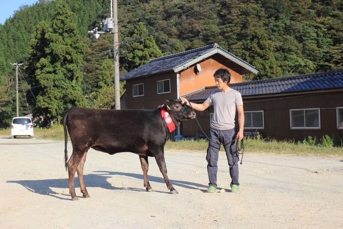 田中さんと肉牛