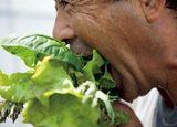 自らの手で守り抜く野菜の確かな信頼