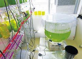 「藻オイル」はユーグレナを超えるか?