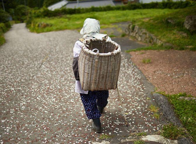 老婆は、中山道の森林で木材を拾いに行きます