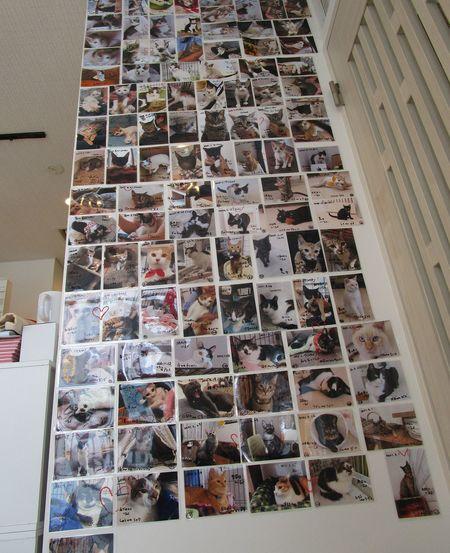 この1年間に「ケット・シー」を通じて譲渡された猫120匹の写真。このうち42匹は奄美大島のノネコである。
