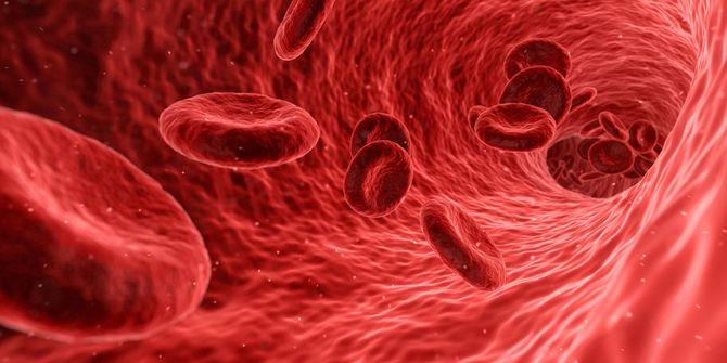 血管の中で運ばれる赤血球