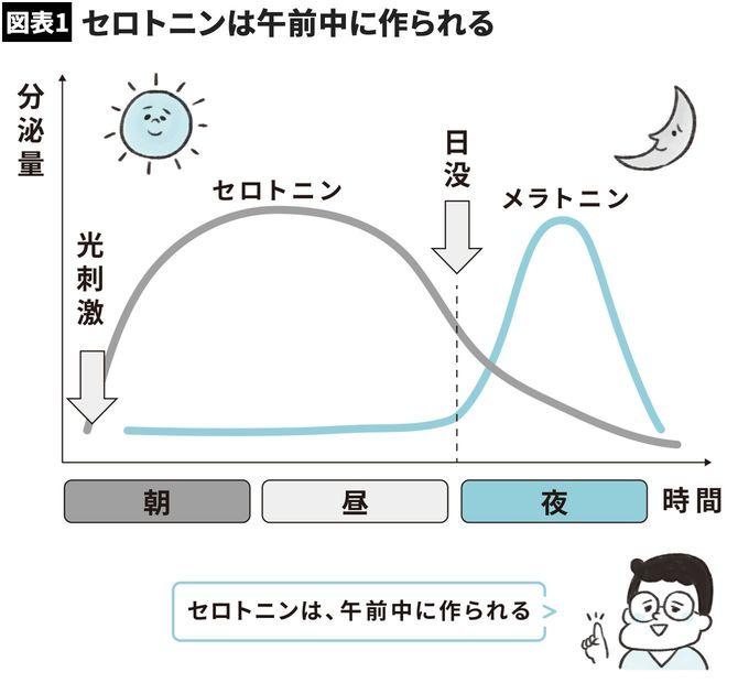 【図表】セロトニンは午前中に作られる