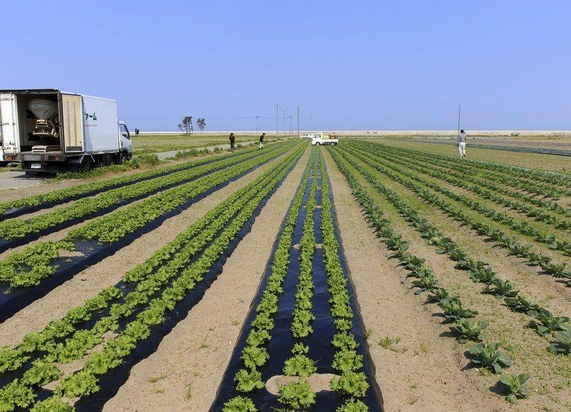 農地オーナーの意欲を引き出せ! 農業「コンビニ化」で売上100億を目指す
