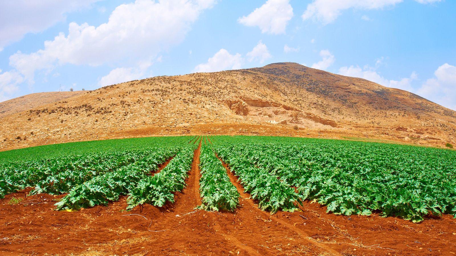 なぜイスラエルが「日本の農業」の救世主なのか 少ない投資で、確実に利益を上げる