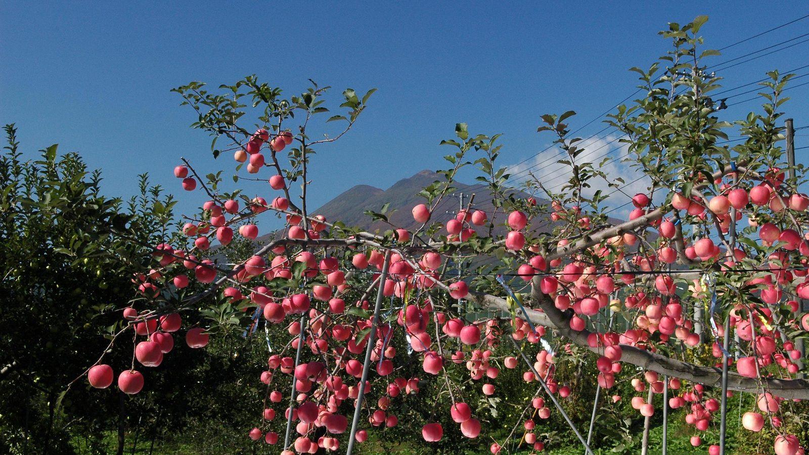 日本一のリンゴの産地は「コーヒーの街」だった スタバも注目するレトロ喫茶の聖地
