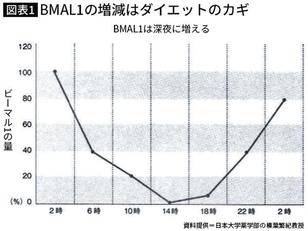 脂肪をためこむBMAL1は午後2時が少ない ※ピーク値を100%とした時の日内変動のイメージ