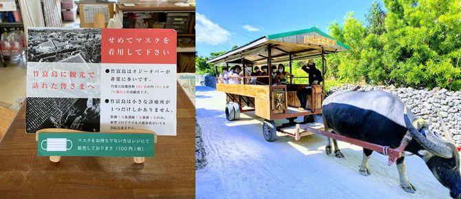 竹富島名物の牛車も、猛暑であろうとマスク着用が義務付けられている
