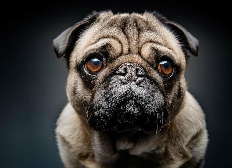 介護ヘルパーは犬猫の糞尿を掃除しない カネがなければ、諦めるしかない