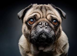 介護ヘルパーは犬猫の糞尿を掃除しない