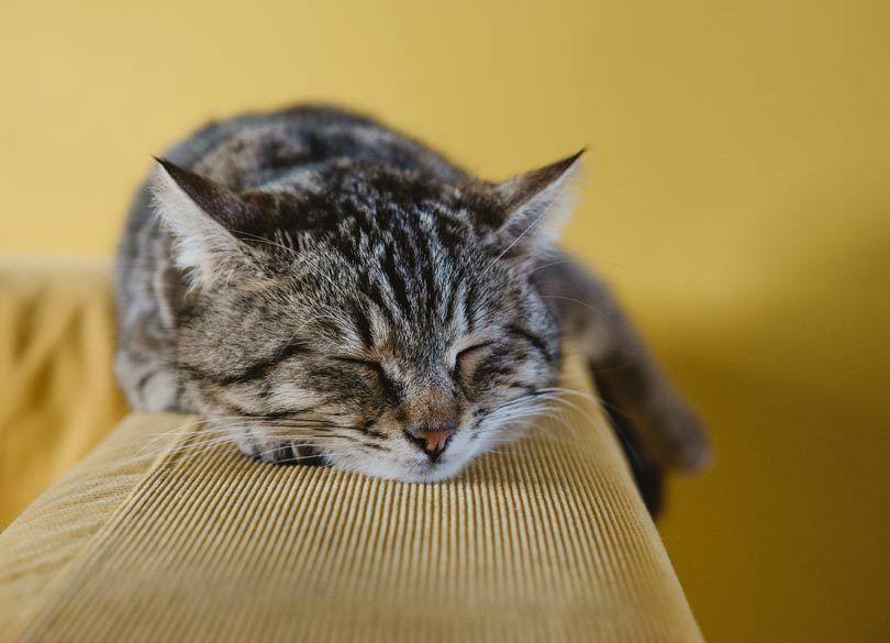 「寝ないで働く」は美徳じゃない!昼寝、休日寝のススメ