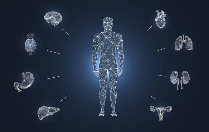 ヒトの周囲にさまざまな臓器が配置されたローポリのイメージ