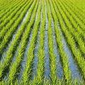 イチローから勇気。農業界のレジェンド