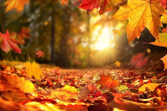 日没前の秋の紅葉