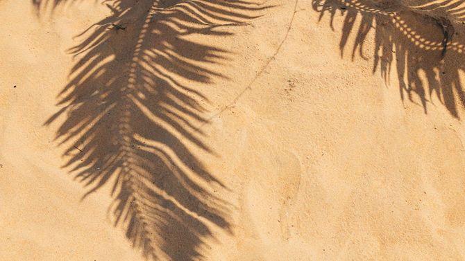 ココナッツヤシの木の葉の影