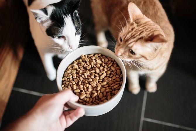 キャットフードと2匹の猫
