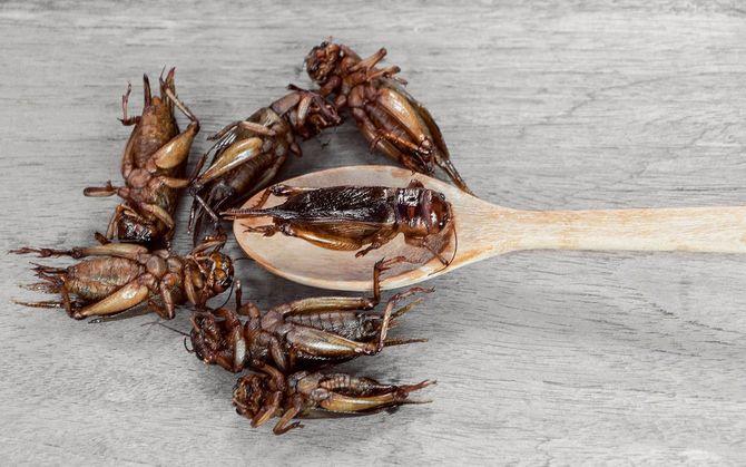 昆虫からの蛋白質食糧源