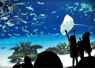 サンシャイン水族館:親子で遊べる首都圏の行列スポット【1】