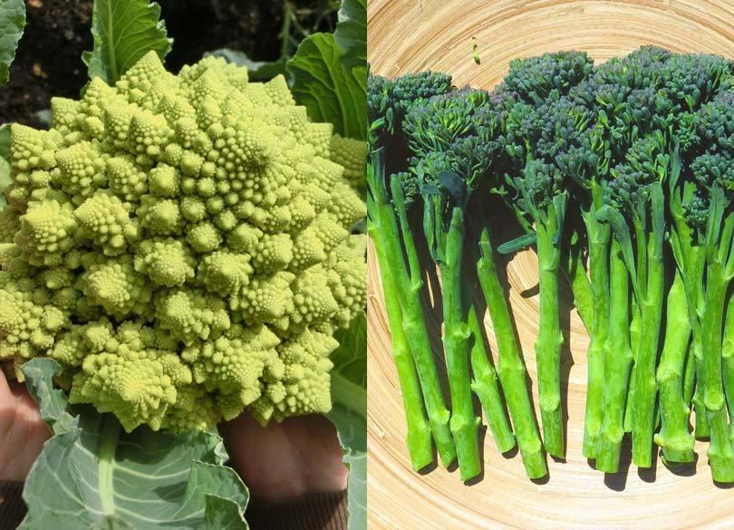 「オクラ」を漢字で書けますか? 野菜の豆知識4