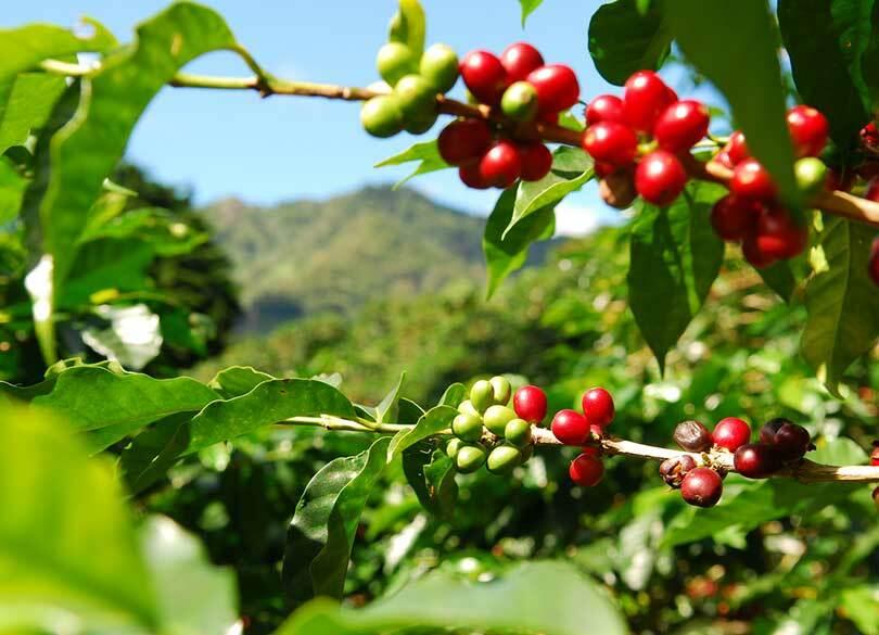 2018年に来る「コーヒー第4の波」の正体 ついにコーヒーはワインに似てきた