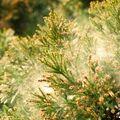 花粉症予測を「600万カ所」で出せるワケ