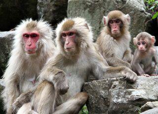 イキった会社員は動物園のサルに過ぎない