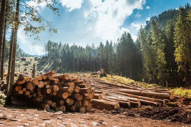 森に積み重なった丸太