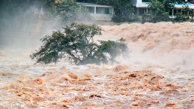 洪水に押し流される流木