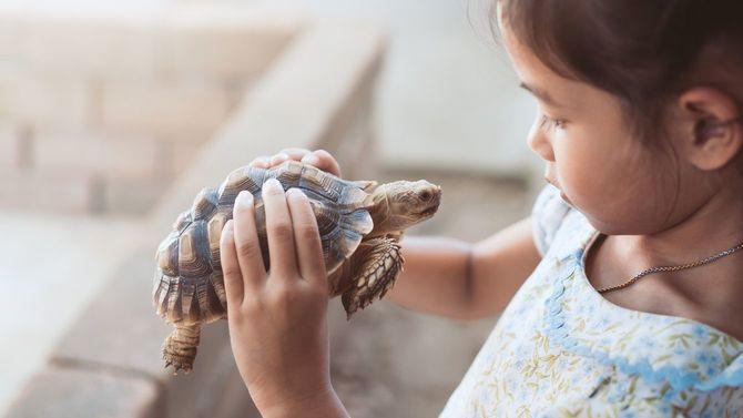 両手で大事そうに亀を持つ少女