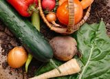 種苗業界に追い風、サカタのタネが最高益