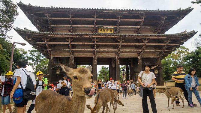 奈良の東大寺にいる鹿たち