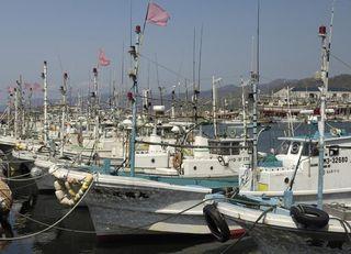 日本の漁業が中国の乱獲に相乗りする事情