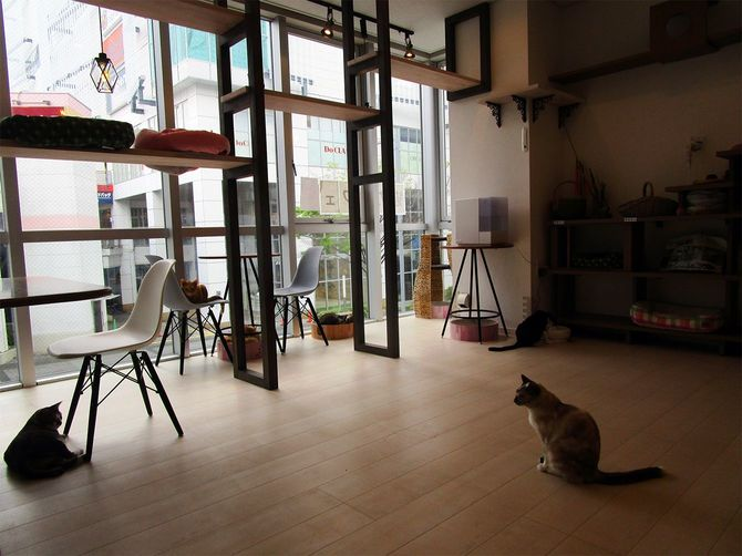 譲渡型猫カフェ「ケット・シー」の店内の様子