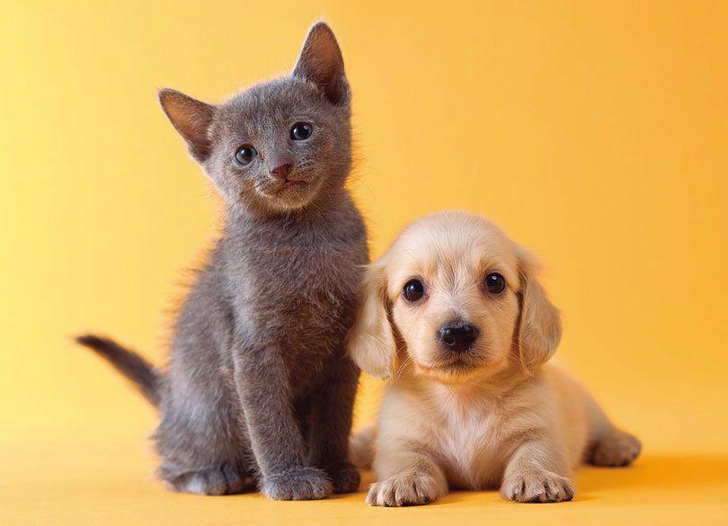 動物学の権威に聞いた「犬と猫、賢いのはどっち?」