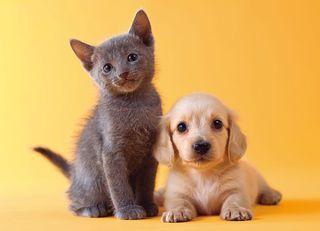 犬と猫、賢いのはどっち?